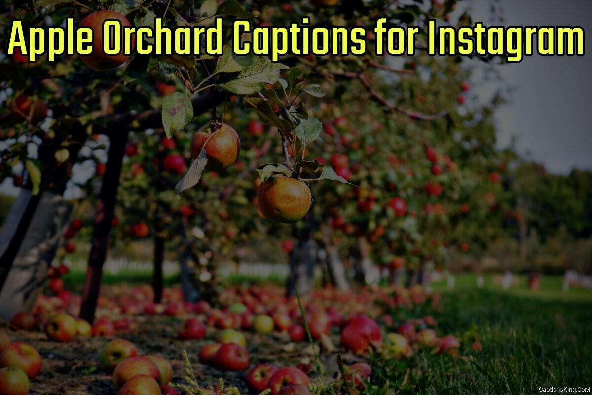 27+ Best Apple Orchard Captions for Instagram