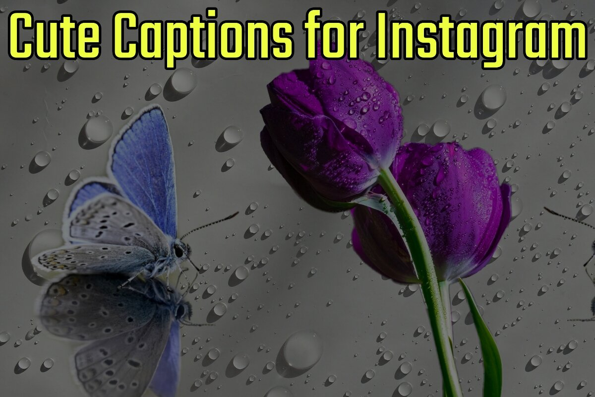 Cute Captions for Instagram
