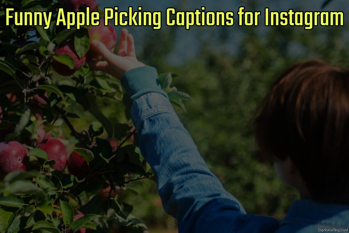 41+ Funny Apple Picking Captions for Instagram